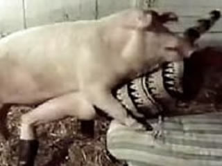 Young girl likes farm sex with pig